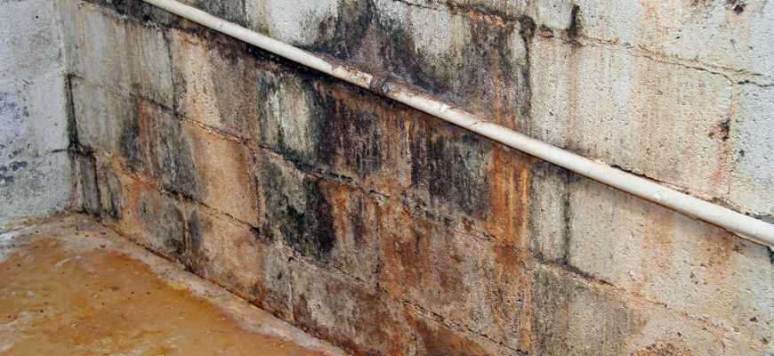 Tri Span Presents a Basic Overview of How and When Mold Contamination Starts