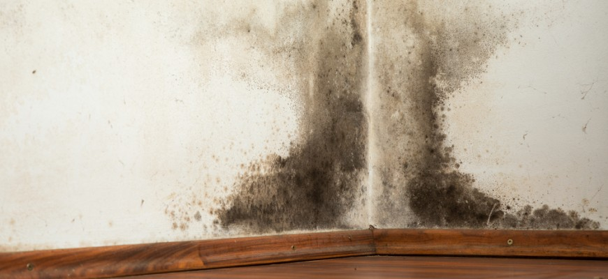 Mold and Mildew Remediation