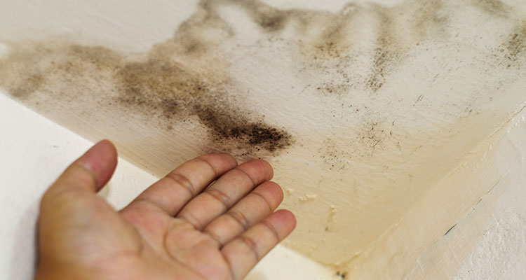 Mold in Your Los Angeles County Home