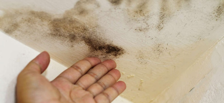 Top 4 Ways to Prevent Mold in Your Home | Orange County Contractors