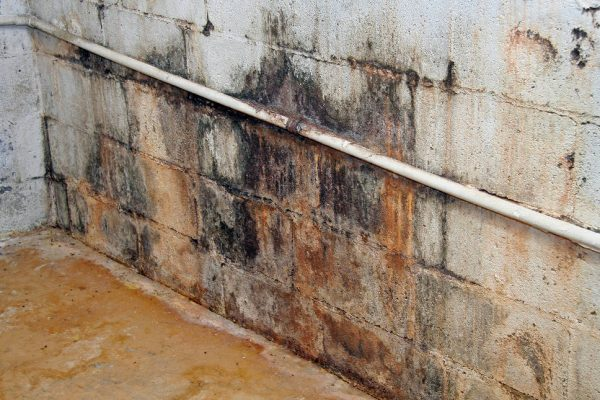 How to Get Rid of Mold Odors In the Basement