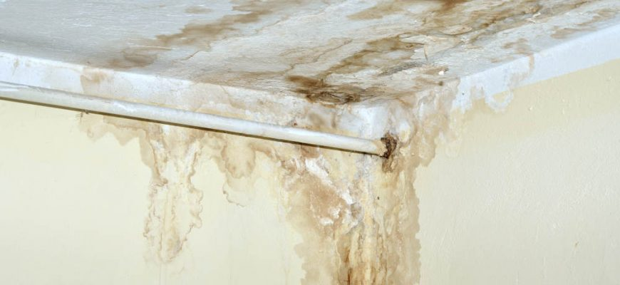 5 Places Mold Can Develop Due to a Leaking Roof | Tri Span Environmental