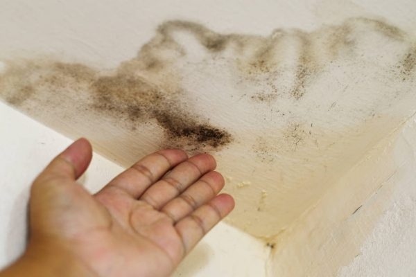 4 Ways to Eliminate Mold in Your Home