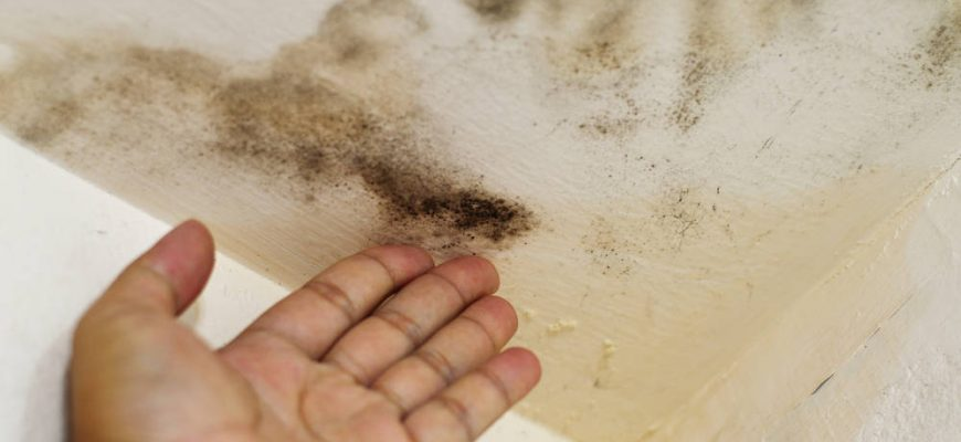 4 Ways to Eliminate Mold in Your Home | Tri Span Environmental